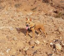 47 Venta Adopciones Y Montas De Perros En Las Palmas Eanuncioscom